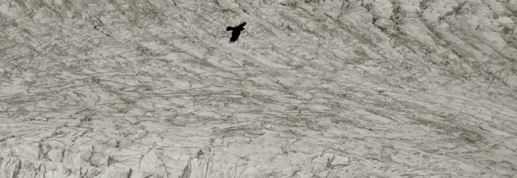 Aigle sur le glacier, photo de Bertrand Bolognesi (2005)